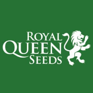 ROYAL QUEEN SEEDS : Tous nos produits ROYAL QUEEN SEEDS dans notre boutique Weed Seeds Luxe.