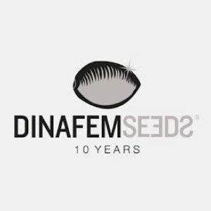 DINAFEM SEEDS : Tous nos produits DINAFEM SEEDS dans notre boutique Weed Seeds Luxe.