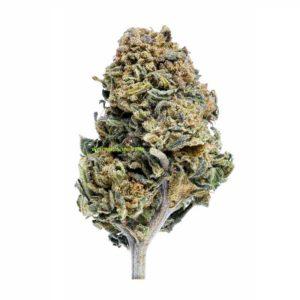 WEED CBD CANNATONIC WEED SEEDS LUXE