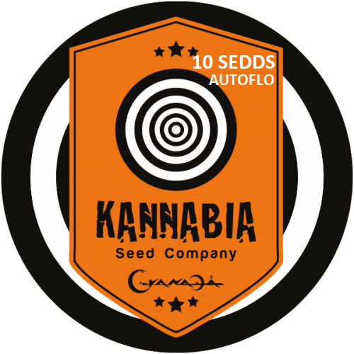 Graine de cannabis Kannabia X10 Autoflo