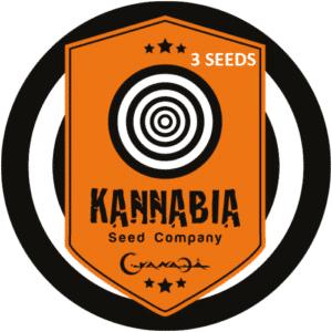 Graine de cannabis Kannabia X3