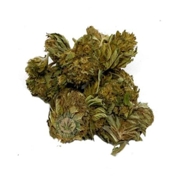 CBD BLUE DREAM WEED SEEDS LUXE