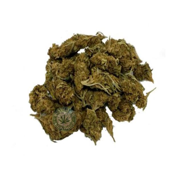 CBD BLUEBERRY WEED SEEDS LUXE