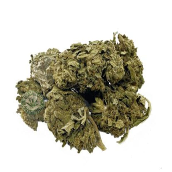 CBD CHEESE WEED SEEDS LUXE