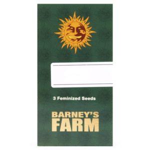 BARNEY'S FARM X3 (FÉMINISÉE)