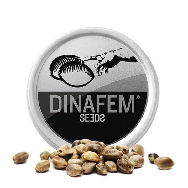 DINAFEM X3 (FÉMINISÉES)